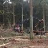 Tennethämmert los... ohrenbetäubender Lärm in Süd...HolzeinschlagimRantzauerForst