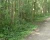 Verwaltung will Anfang September Bäume abholzen – Vorsicht im Pinnaubiotop und auf dem Rhen!