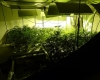Polizei schnappt Cannabis-Opas in Kisdorf