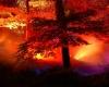 Norderstedt: Das wird ein flammend buntes Stadtpark-Jahr!
