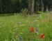Gärtner macht WHU-Pflanzung platt - CDU fordert Abschaffung der Blühstreifen an der Hamburger Straße