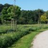 bluehwiese-buergerpark_