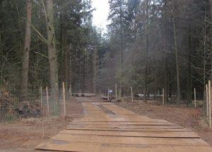 Schneisenim Wald_1